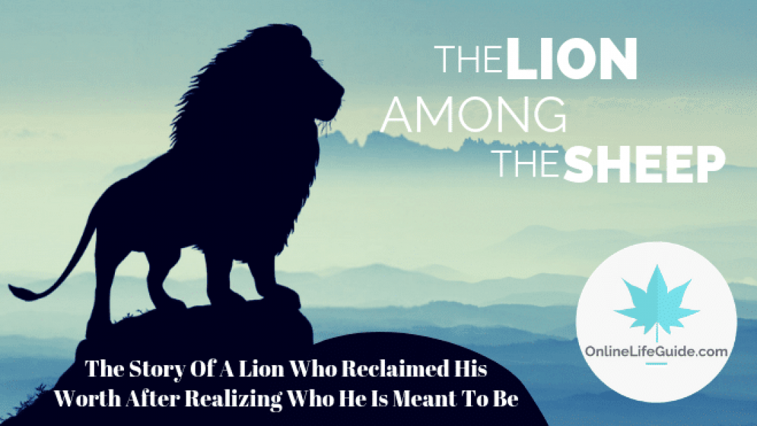 The Lion Amongst The Sheep – Life Lessons